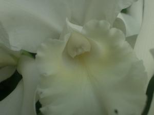 Orchidée mars 2011