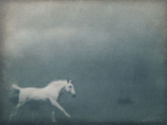 White Horse - Stefan Giftthaler