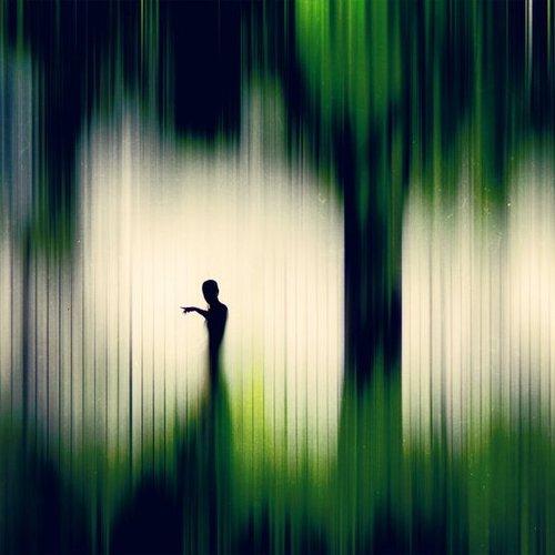 Forest of Denial by Jon Damaschke