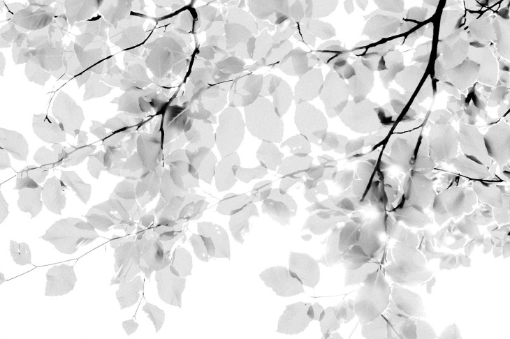 The edge of the forest, Brussels, june 2014, Bertrand Vanden Elsacker