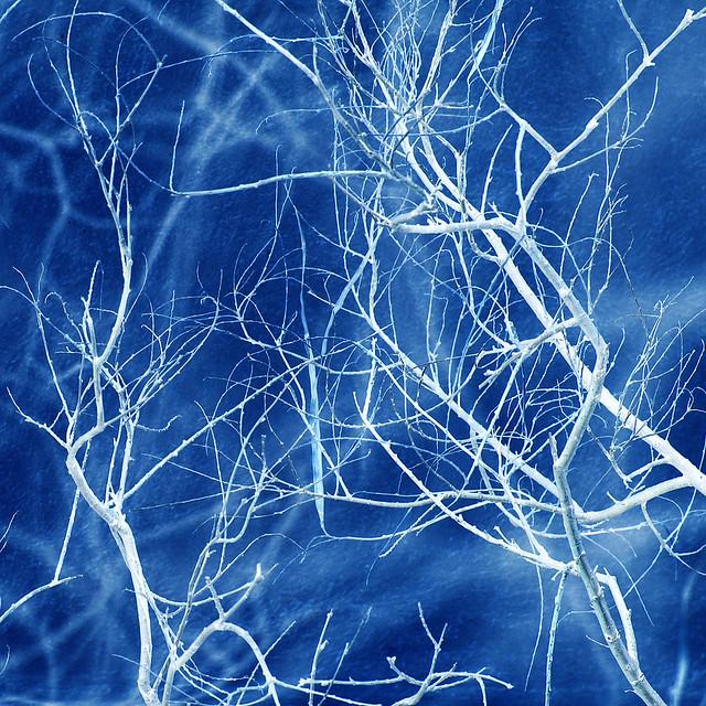 blue dendrites