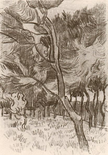 Vincent van Gogh: Pine Trees in the Garden of the Asylum Saint-Rémy: 5-22 October 1889 (Amsterdam, Van Gogh Museum)